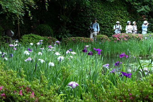 平安神宮 庭園開放_e0048413_20101570.jpg