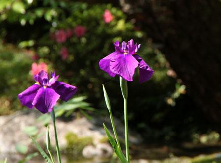 平安神宮 庭園開放_e0048413_20102875.jpg