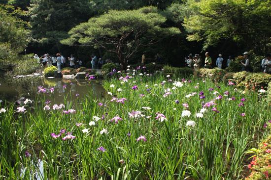 平安神宮 庭園開放_e0048413_2010289.jpg