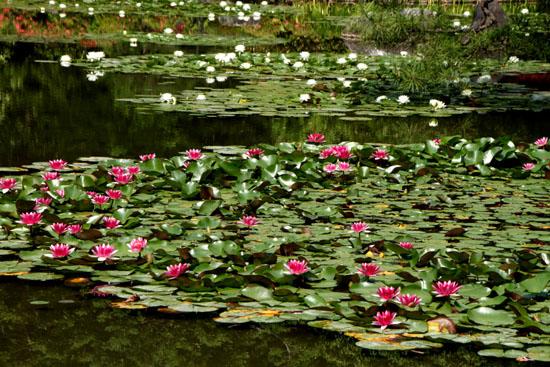 平安神宮 庭園開放_e0048413_20105852.jpg