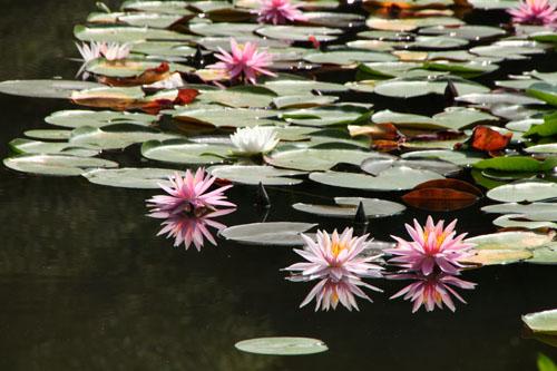 平安神宮 庭園開放_e0048413_20111474.jpg