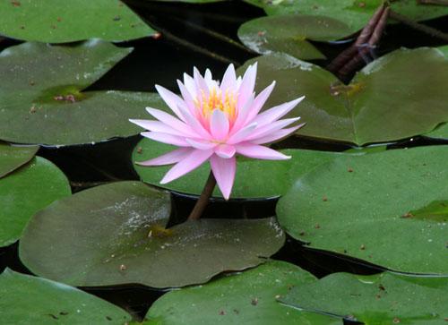 平安神宮 庭園開放_e0048413_20112725.jpg