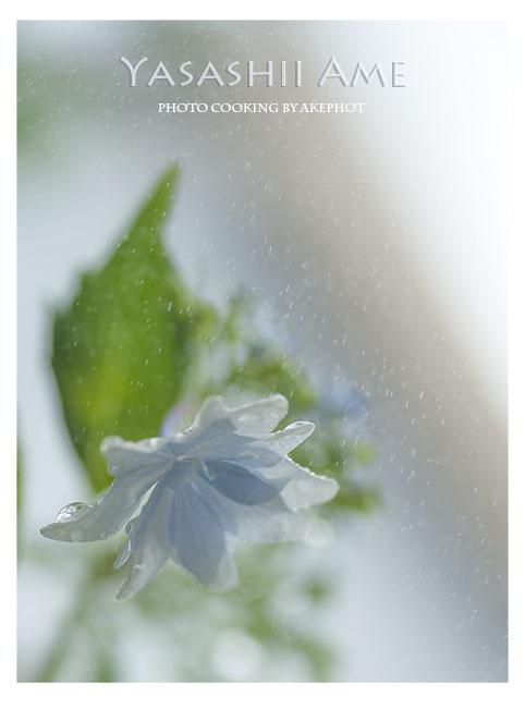 やさしい雨_e0127416_123518.jpg