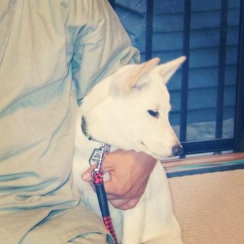 そもそも、犬を飼うことになった理由(ワケ) ⑨_b0090517_14435221.jpg