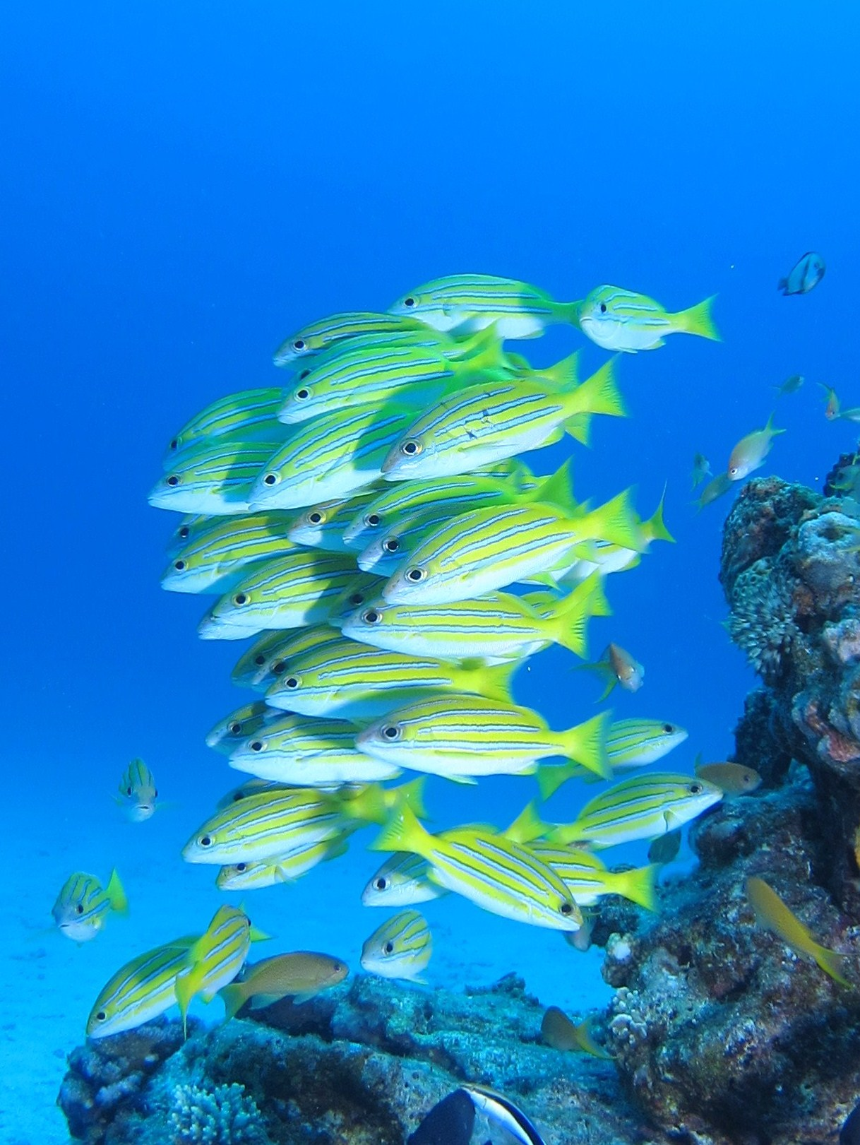6月7日水納島で驚愕の事実が・・・_c0070933_2146562.jpg