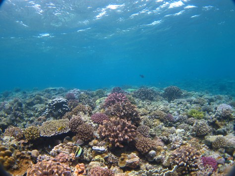 6月7日水納島で驚愕の事実が・・・_c0070933_21483329.jpg