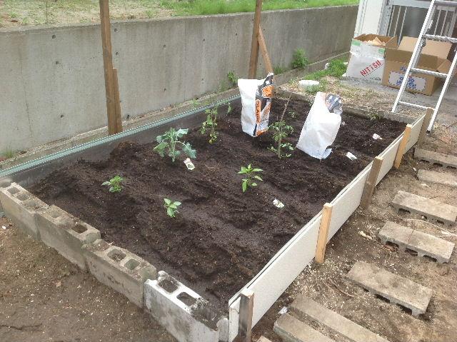 秒読み段階 家庭菜園と庭と諸々_f0031037_20231097.jpg