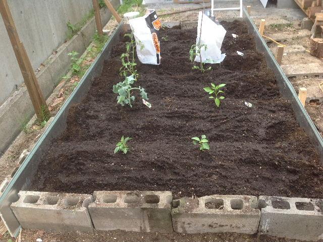 秒読み段階 家庭菜園と庭と諸々_f0031037_20232024.jpg