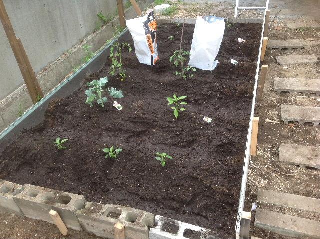 秒読み段階 家庭菜園と庭と諸々_f0031037_2023276.jpg