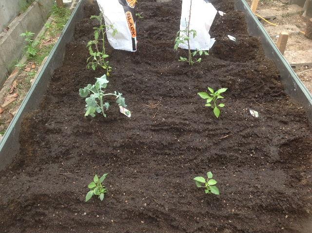 秒読み段階 家庭菜園と庭と諸々_f0031037_20232789.jpg