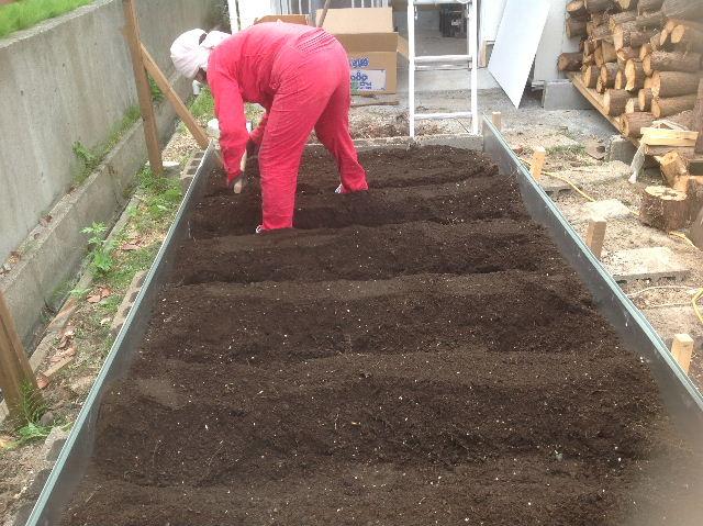秒読み段階 家庭菜園と庭と諸々_f0031037_20233443.jpg