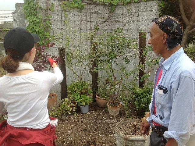 秒読み段階 家庭菜園と庭と諸々_f0031037_20275362.jpg