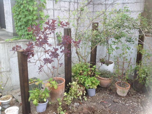 秒読み段階 家庭菜園と庭と諸々_f0031037_2028539.jpg