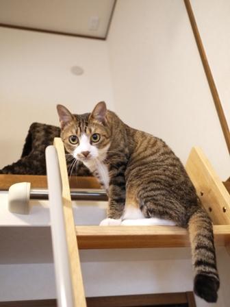 猫のお友だち じょあんちゃんはんくすちゃんあーるくん編。_a0143140_21492374.jpg