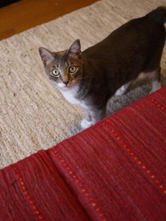 猫のお友だち じょあんちゃんはんくすちゃんあーるくん編。_a0143140_21505292.jpg