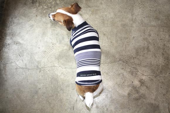 seven seas dog  Border Line T セブンシーズドッグ ボーダーラインTシャツ_d0217958_12183768.jpg