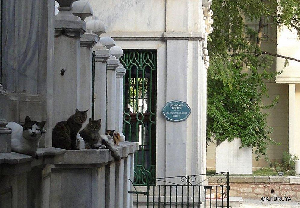 トルコ旅行記 38 イスタンブール旧市街その2_a0092659_1336203.jpg