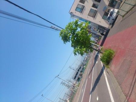 五稜郭駅方面を眺める_b0106766_2244262.jpg