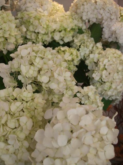 オークリーフ(スモークツリーと紫陽花)_f0049672_16165945.jpg