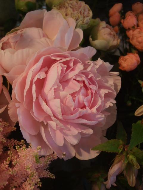 オークリーフ(スモークツリーと紫陽花)_f0049672_16173584.jpg