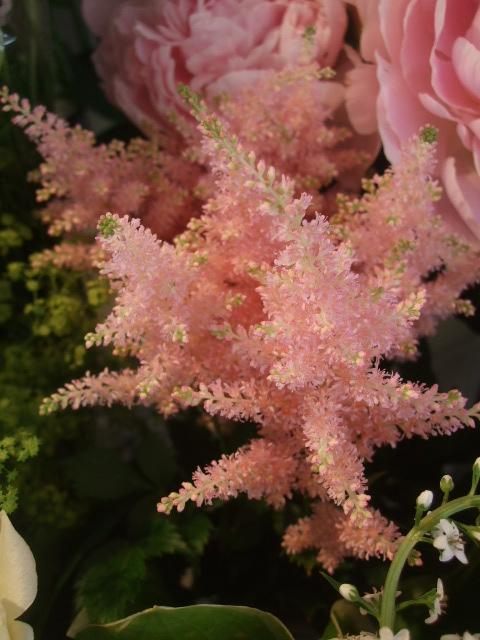 オークリーフ(スモークツリーと紫陽花)_f0049672_16181118.jpg