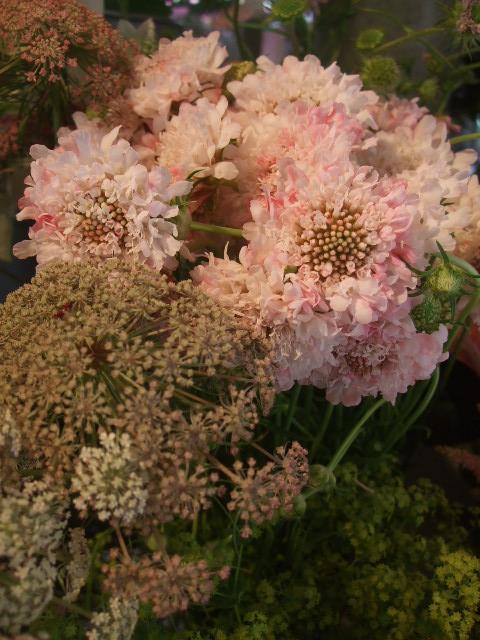 オークリーフ(スモークツリーと紫陽花)_f0049672_16185699.jpg