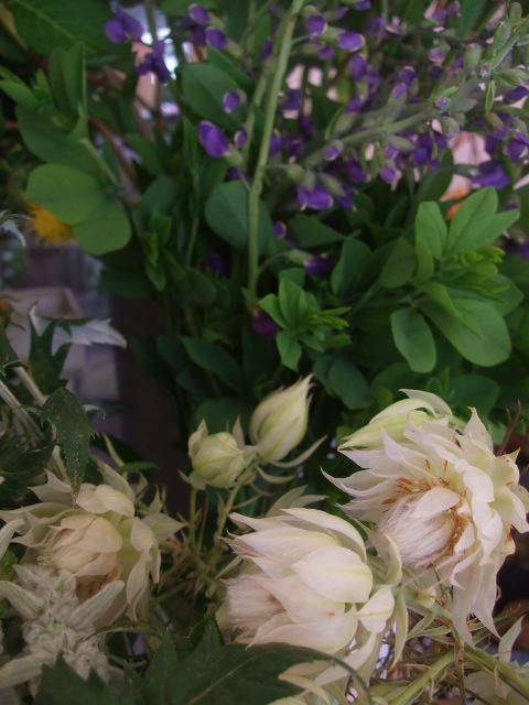 オークリーフ(スモークツリーと紫陽花)_f0049672_16191032.jpg