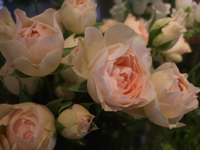 オークリーフ(スモークツリーと紫陽花)_f0049672_16192686.jpg