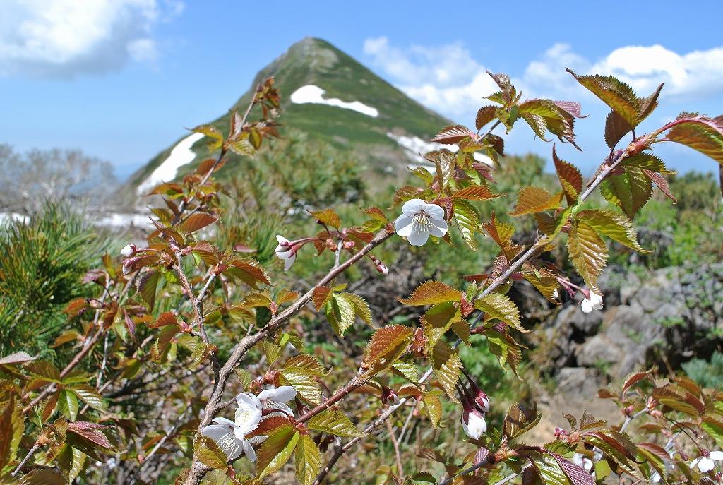 6月7日、徳舜瞥山とホロホロ山_f0138096_1722487.jpg