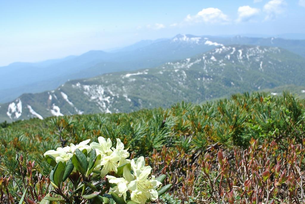 6月7日、徳舜瞥山とホロホロ山_f0138096_1723385.jpg