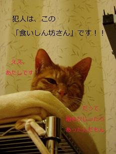 b0200310_17494876.jpg