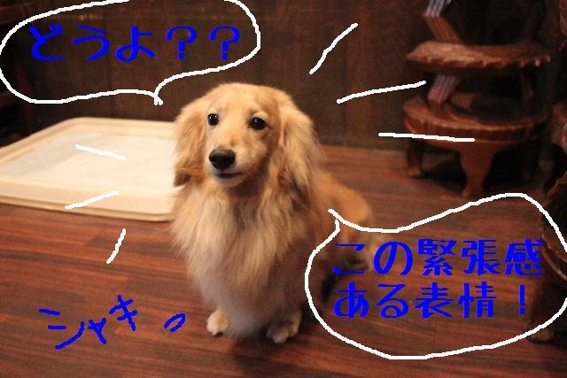 b0130018_11332167.jpg
