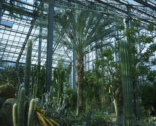 植物園_b0212922_0591840.jpg