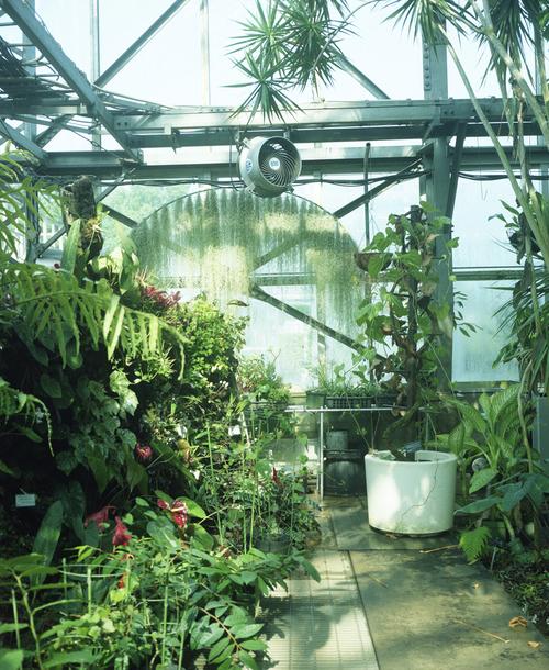 植物園_b0212922_0593681.jpg