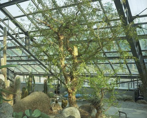 植物園_b0212922_114948.jpg