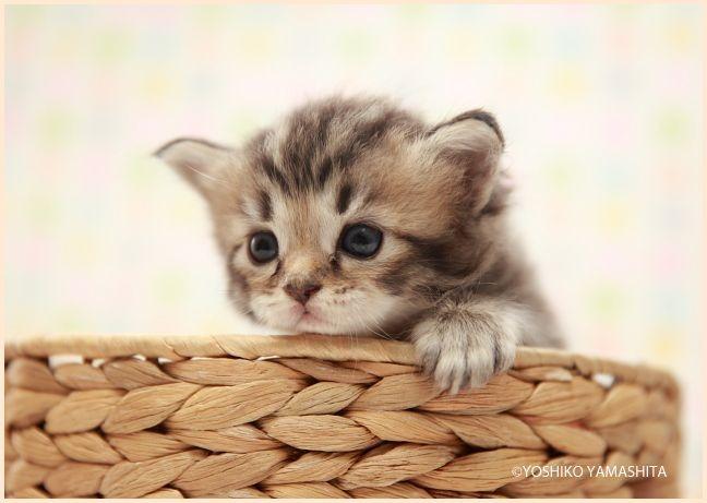 cute。。。_f0031022_2255322.jpg