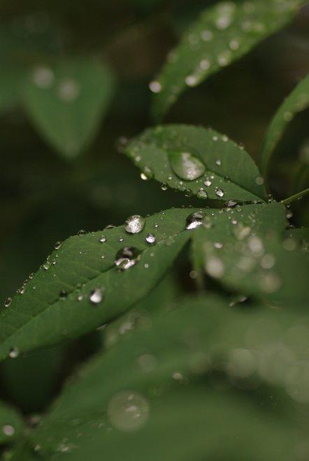 雨上がりの雫_e0171336_113552.jpg