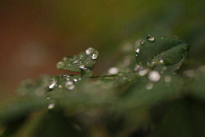雨上がりの雫_e0171336_1144970.jpg