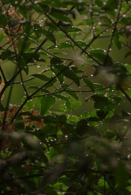 雨上がりの雫_e0171336_135536.jpg