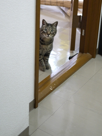 猫のお友だち 浅間くん阿蘇くん編。_a0143140_173367.jpg