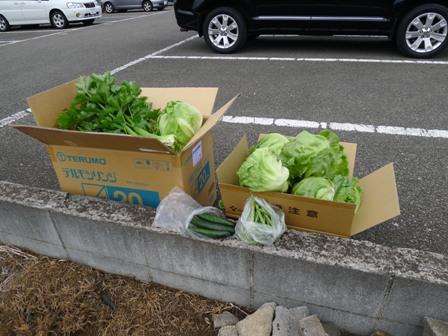 野菜の収穫!!_d0173654_12571228.jpg