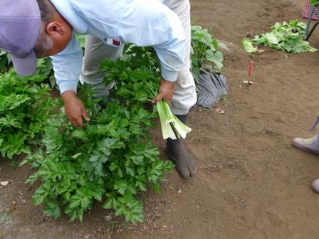 野菜の収穫!!_d0173654_12572440.jpg