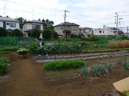 野菜の収穫!!_d0173654_12573533.jpg