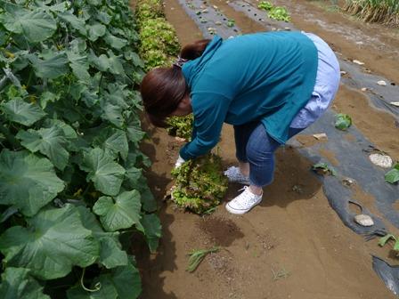 野菜の収穫!!_d0173654_12574187.jpg