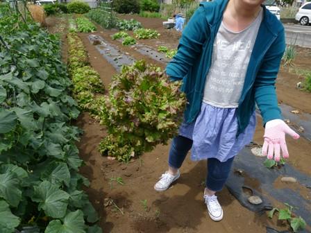 野菜の収穫!!_d0173654_12575060.jpg