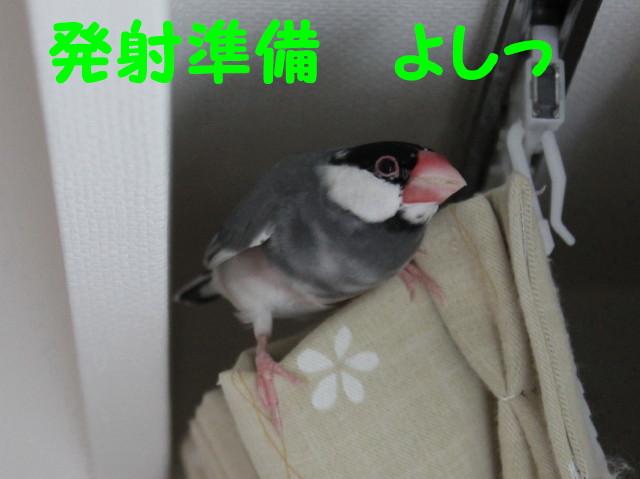 b0158061_19404582.jpg