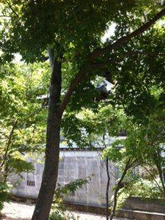 庭木選び_c0274374_18285773.jpg