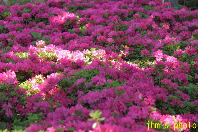 花は華_a0158797_0592158.jpg