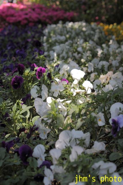 花は華_a0158797_1113189.jpg