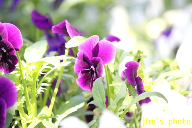 花は華_a0158797_1121880.jpg
